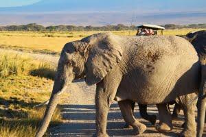 safari-in-kenia-amboseli-national-park-13