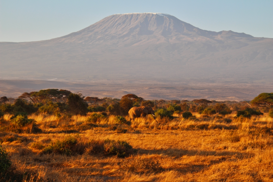 safari-in-kenia-amboseli-national-park-14
