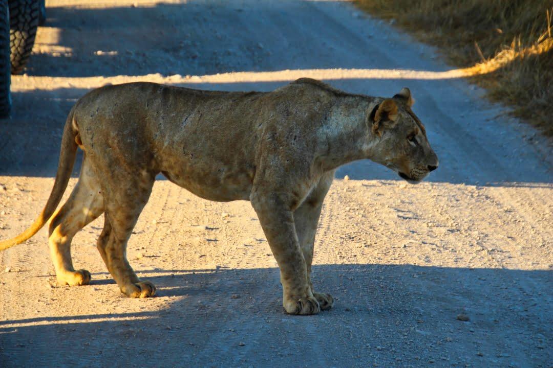 safari-in-kenia-amboseli-national-park-15