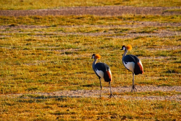 safari-in-kenia-amboseli-national-park-17