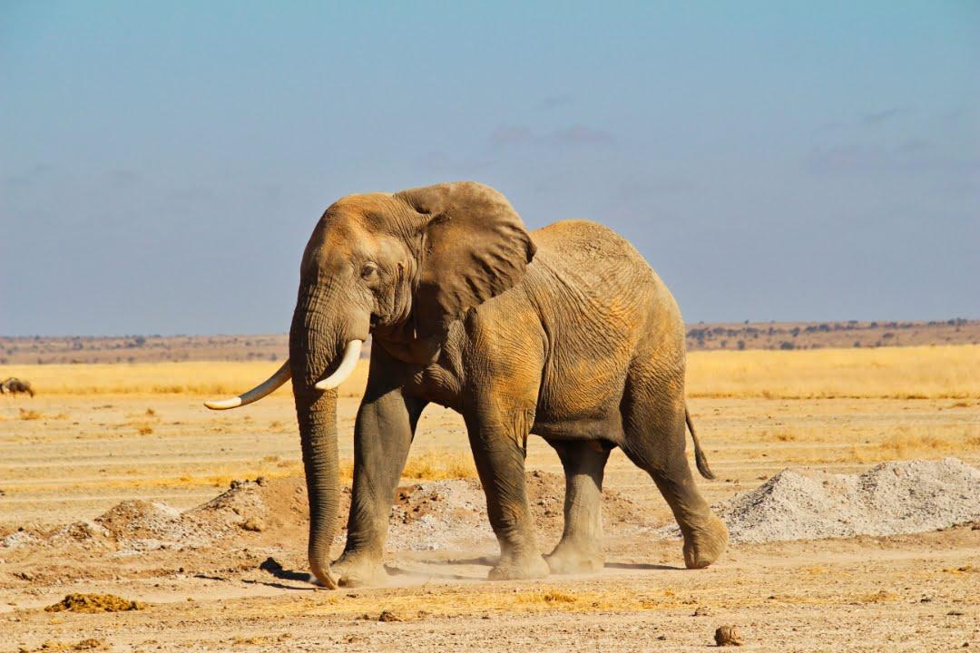 safari-in-kenia-amboseli-national-park-18