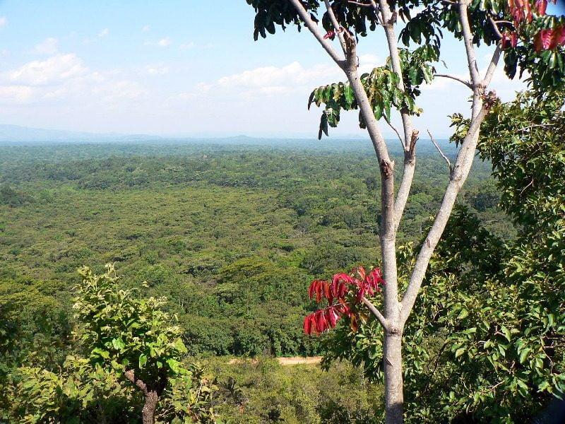 safari-in-kenia-kakamega_forest