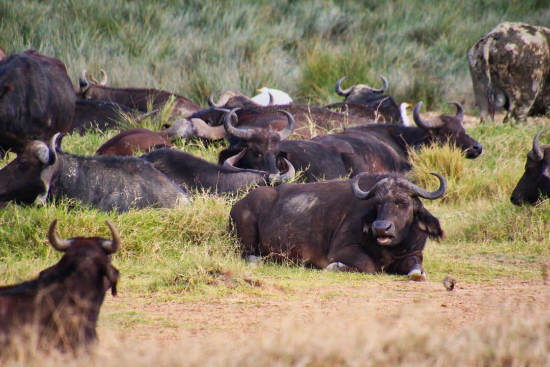 safari-in-kenia-lake-nakuru-04