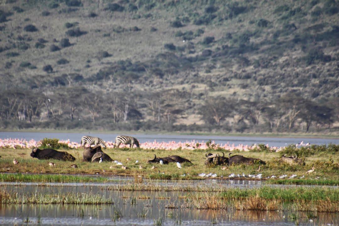 safari-in-kenia-lake-nakuru-06