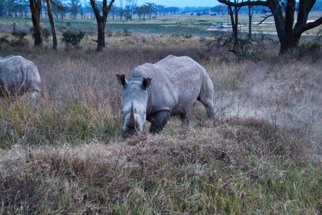 safari-in-kenia-lake-nakuru-19