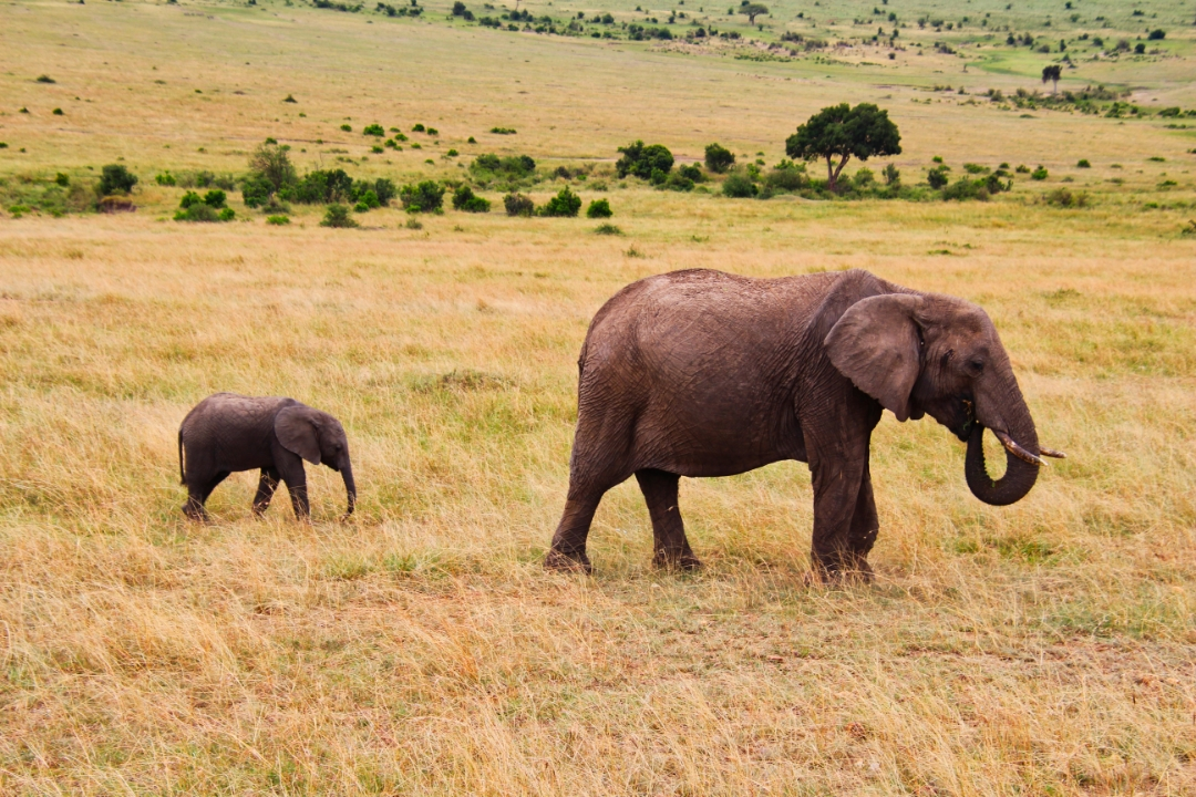 safari-in-kenia-masai-mara-game-reserve-04