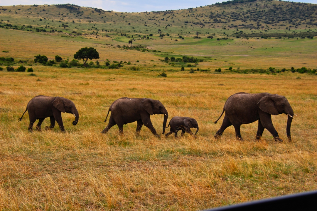 safari-in-kenia-masai-mara-game-reserve-05