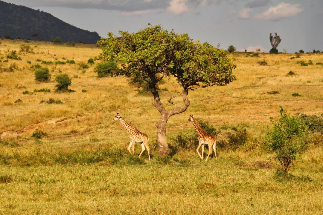 safari-in-kenia-masai-mara-game-reserve-06