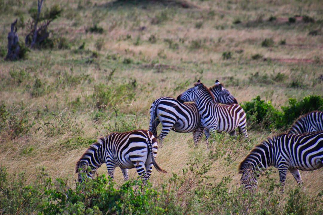 safari-in-kenia-masai-mara-game-reserve-07