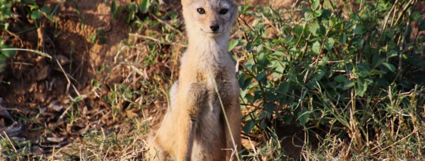safari-in-kenia-masai-mara-game-reserve-08