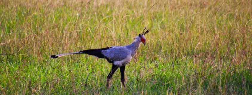 safari-in-kenia-masai-mara-game-reserve-09