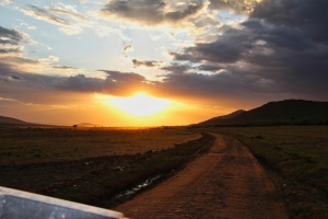 safari-in-kenia-masai-mara-game-reserve-11