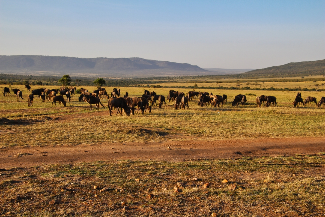 safari-in-kenia-masai-mara-game-reserve-13