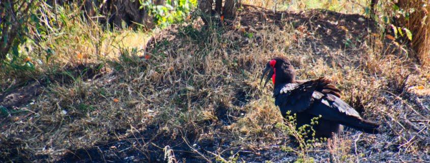 safari-in-kenia-masai-mara-game-reserve-17