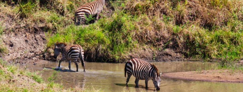 safari-in-kenia-masai-mara-game-reserve-18