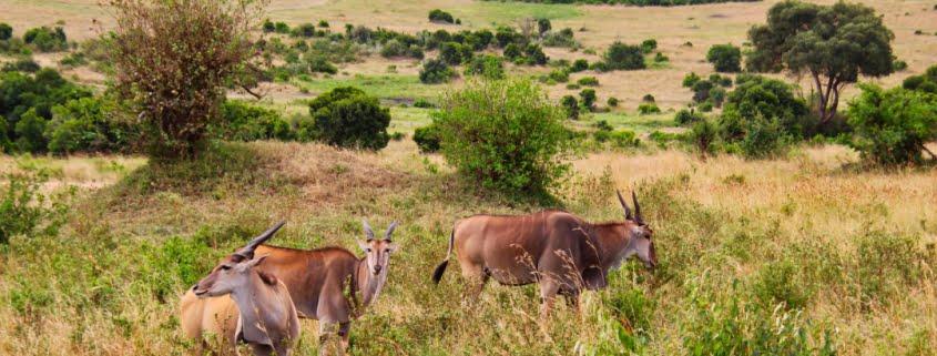 safari-in-kenia-masai-mara-game-reserve-21