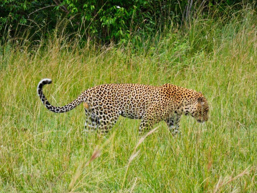 safari-in-kenia-masai-mara-game-reserve-30