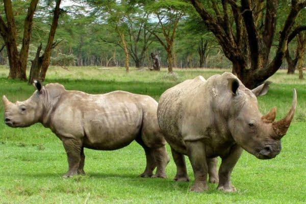 Kenia: 10 dagen Safari Chui – incl. 2 binnenlandse propellervluchten (MS7)