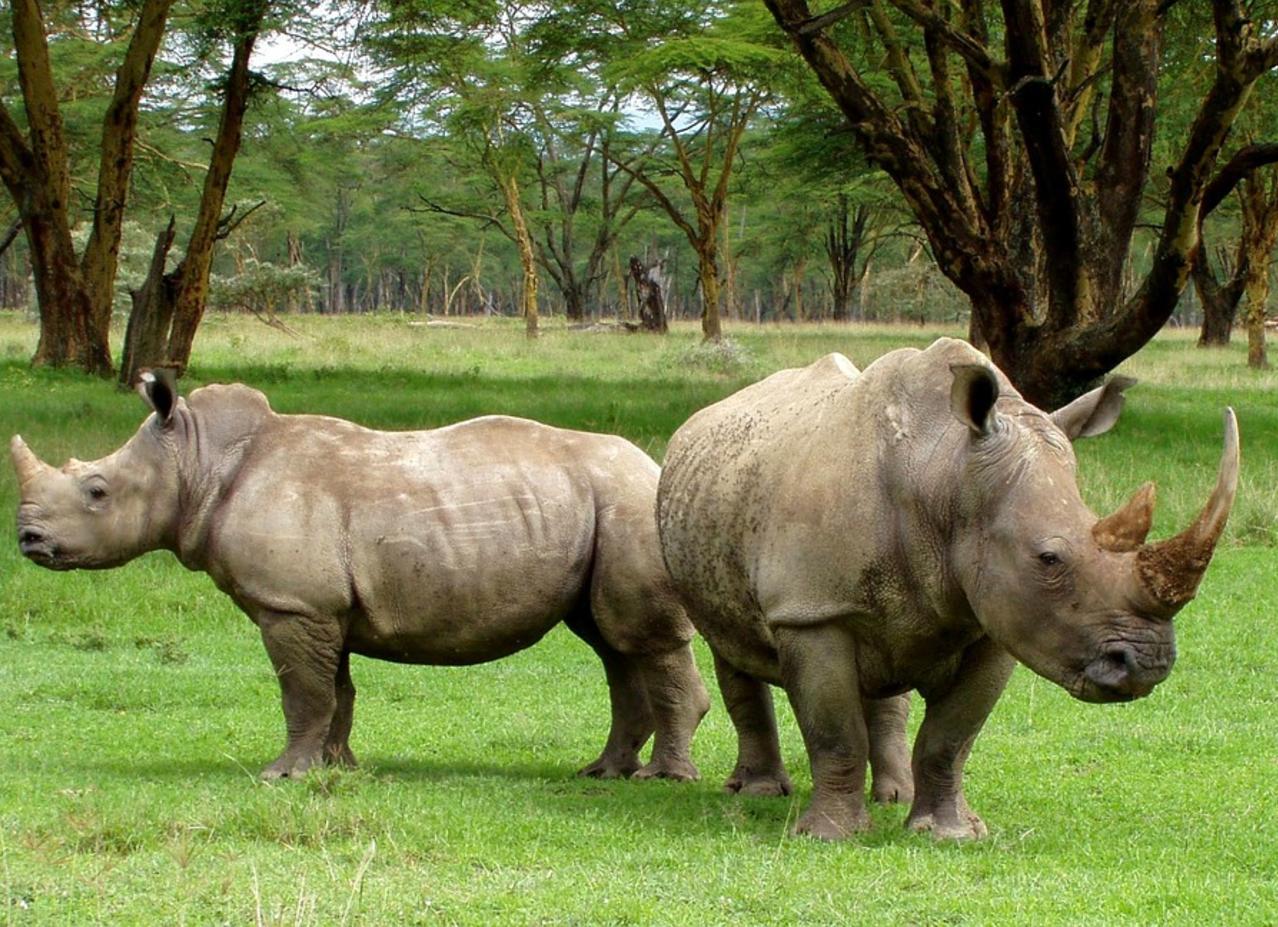 safari-in-kenia-rhino