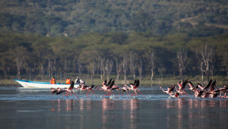 safari-in-kenia_lake-naivasha_01