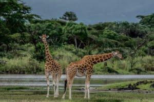 safari-in-kenia_lake-naivasha_02