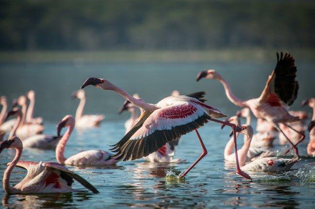 safari-in-kenia_lake-naivasha_03