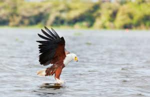 safari-in-kenia_lake-naivasha_04