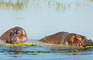 safari-in-kenia_lake-naivasha_05