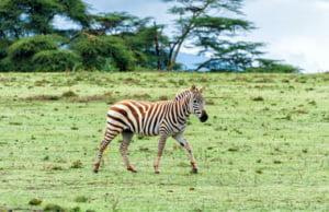 safari-in-kenia_lake-naivasha_06