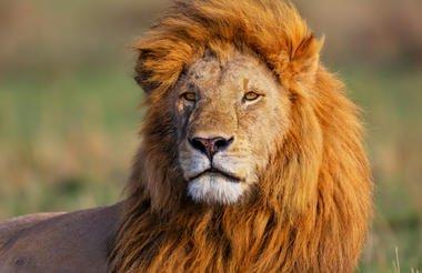 safari-in-kenia_masai-mara_01