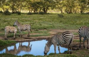 safari-in-kenia_masai-mara_02