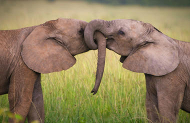safari-in-kenia_masai-mara_04