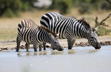 safari-in-kenia_ol-pejeta-02