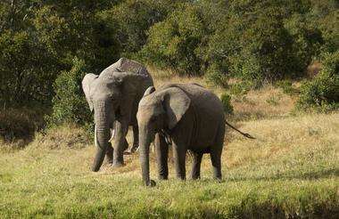 safari-in-kenia_ol-pejeta-03