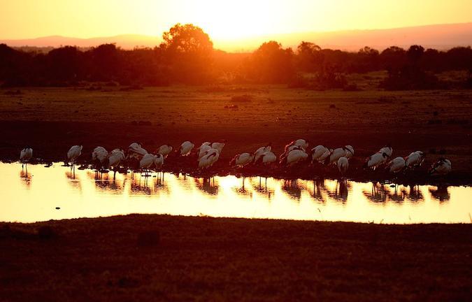 safari-in-kenia_sweetwaters-serena-camp_06