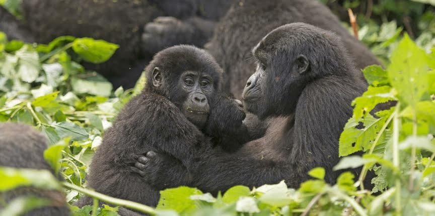safari-in-oeganda-bwindi-impenetrable-forest_01