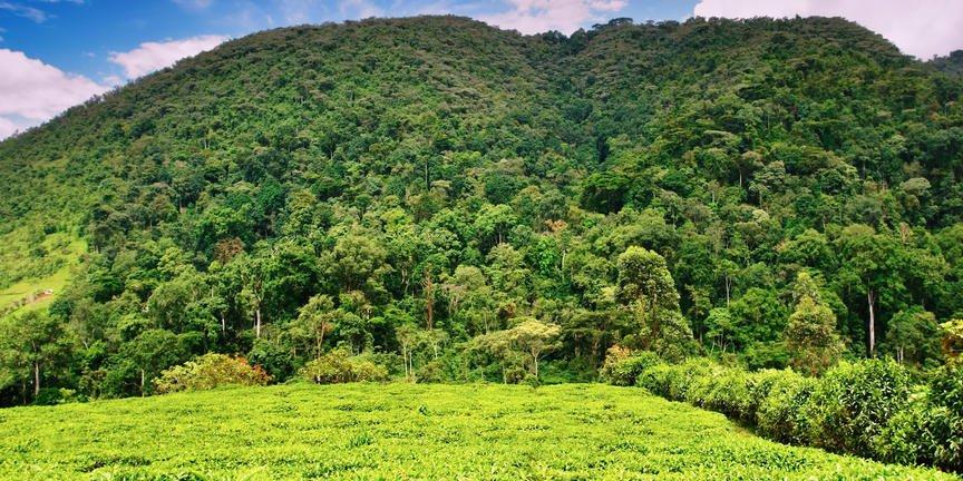 safari-in-oeganda-bwindi-impenetrable-forest_02
