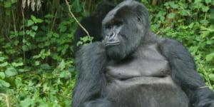 safari-in-oeganda-bwindi-impenetrable-forest_03