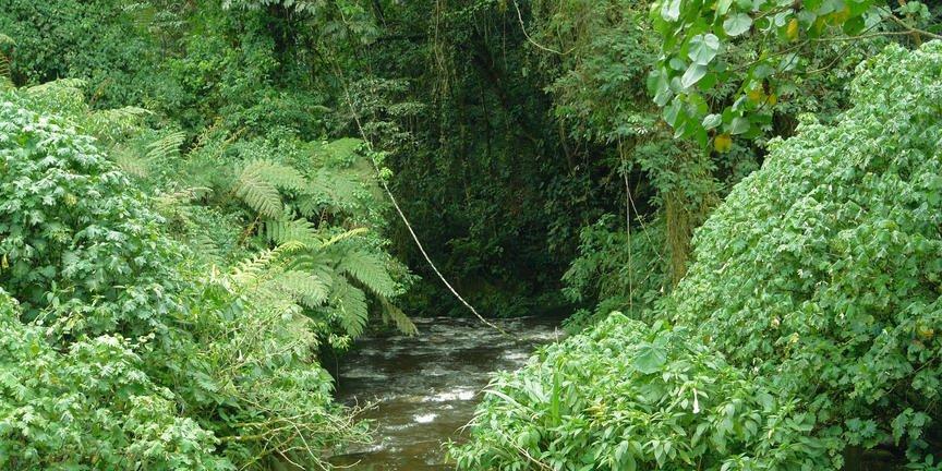 safari-in-oeganda-bwindi-impenetrable-forest_04