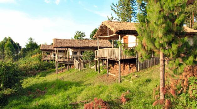 safari-in-oeganda-gorilla-mist-camp_01