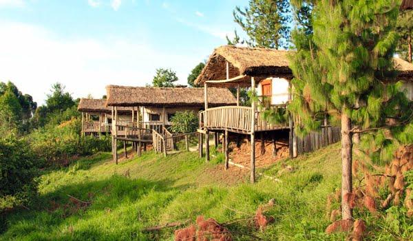 Gorilla Mist Camp @Bwindi Impenetrable Forest – Oeganda