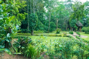 safari-in-oeganda-kibale-forest-camp_03