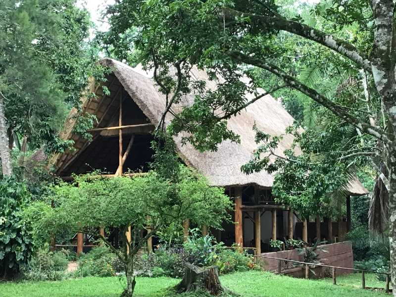 Kibale Forest Camp @Evergreen Forest – Oeganda
