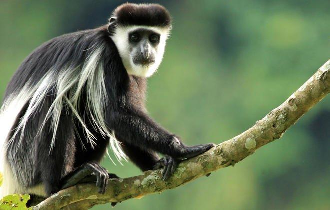 Oeganda & Rwanda: 10 dagen Ultimate Uganda & Rwanda Wildlife Safari (Gorilla Trekking) (MS4)