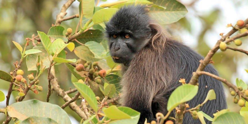 safari-in-oeganda-kibale_04
