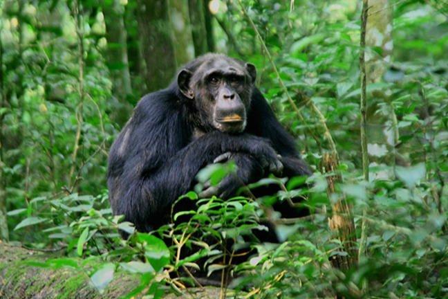 safari-in-oeganda-kibale_05