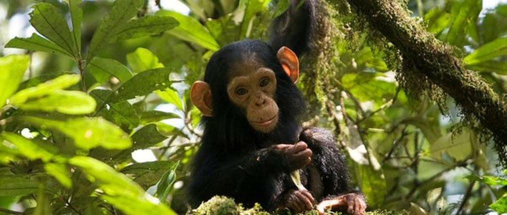 safari-in-oeganda-kibale_06