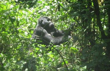 safari-in-oeganda-lake-bunyonyi_05