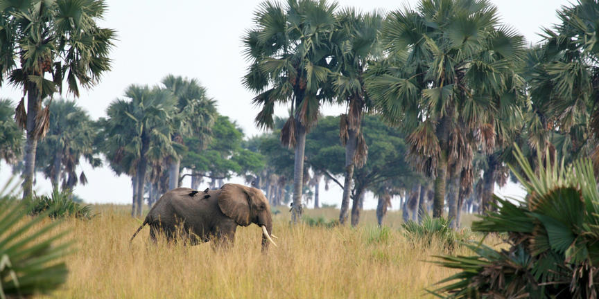 safari-in-oeganda-murchison-falls-national-park_02