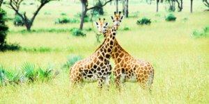 safari-in-oeganda-murchison-falls-national-park_04